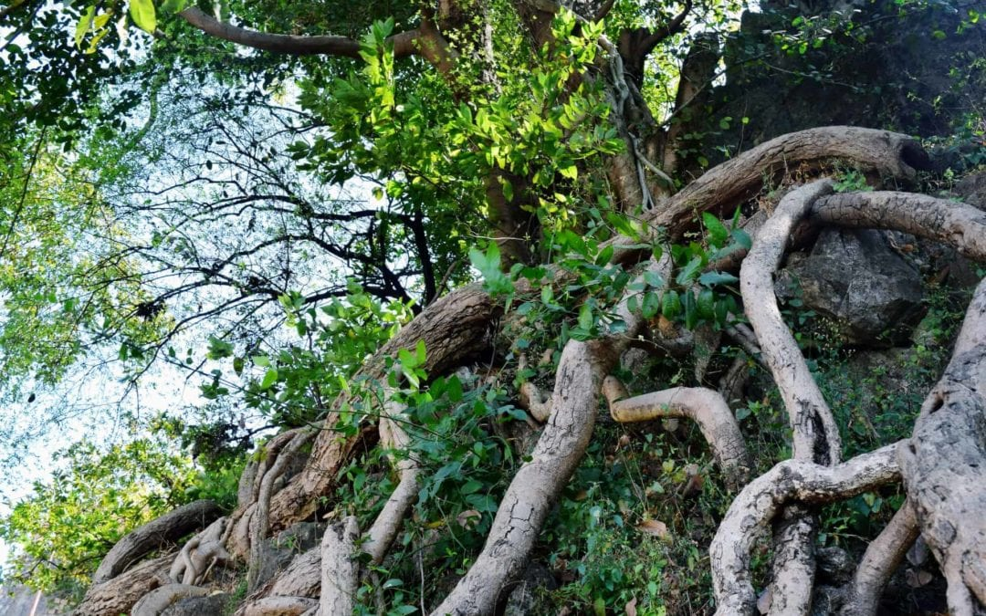 HOW TO CARE FOR TREE ROOTS…